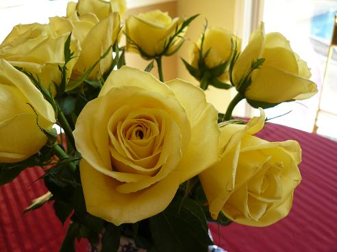 Holidays and Observances Valentines Day Information