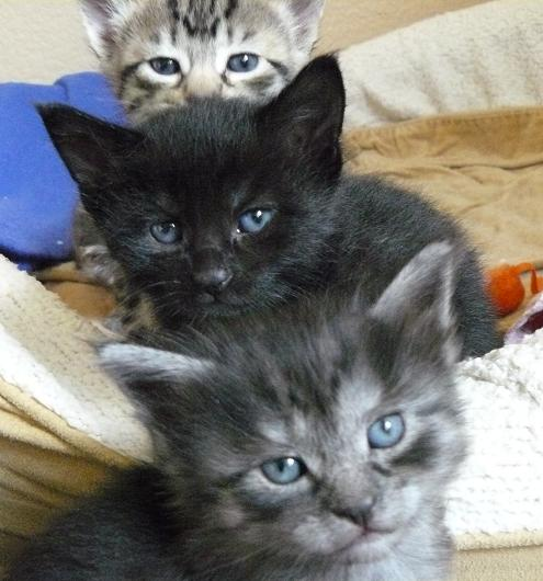 Kitten Totem Pole - top to bottom Moxie/Balou/Ellie - Pet Holidays by Holidays and Observances
