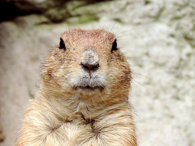 Groundhog Day - February 2nd