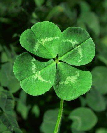 St. Patricks Day information from the Holidays and Observances Website