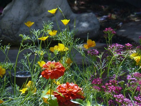 California Poppies, Marigolds, and Pink Yarrow