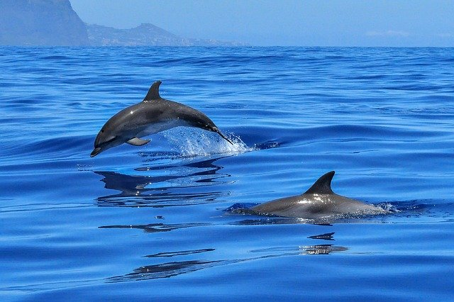 April 14th is National Dolphin Day!