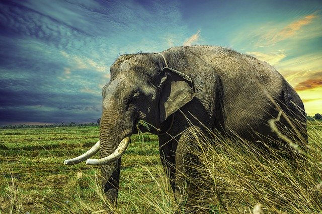 August 12 is World Elephant Day!