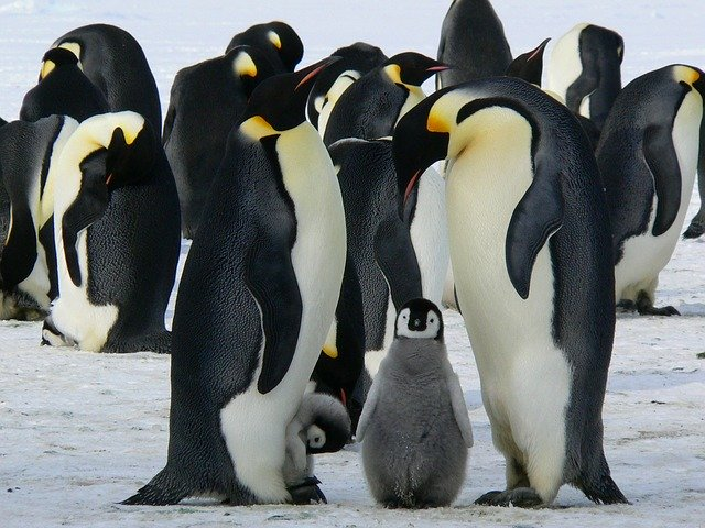 April 25th is World Penguin Day!