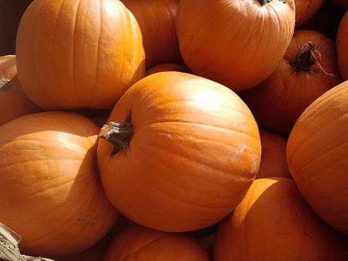 Pumpkins Recipes and Tips from Holidays and Observances