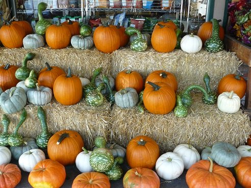 Pumpkin Facts and Tips from Holidays and Observances